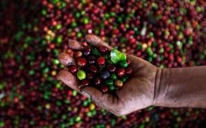 PashaCafe_Cafea_De_Specialitate_Honduras_1