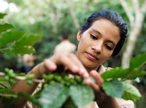 PashaCafe_Cafea_De_Specialitate_Honduras_3