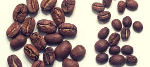 Pasha_Cafe_Cafea_De_Specialitate_Pacamara